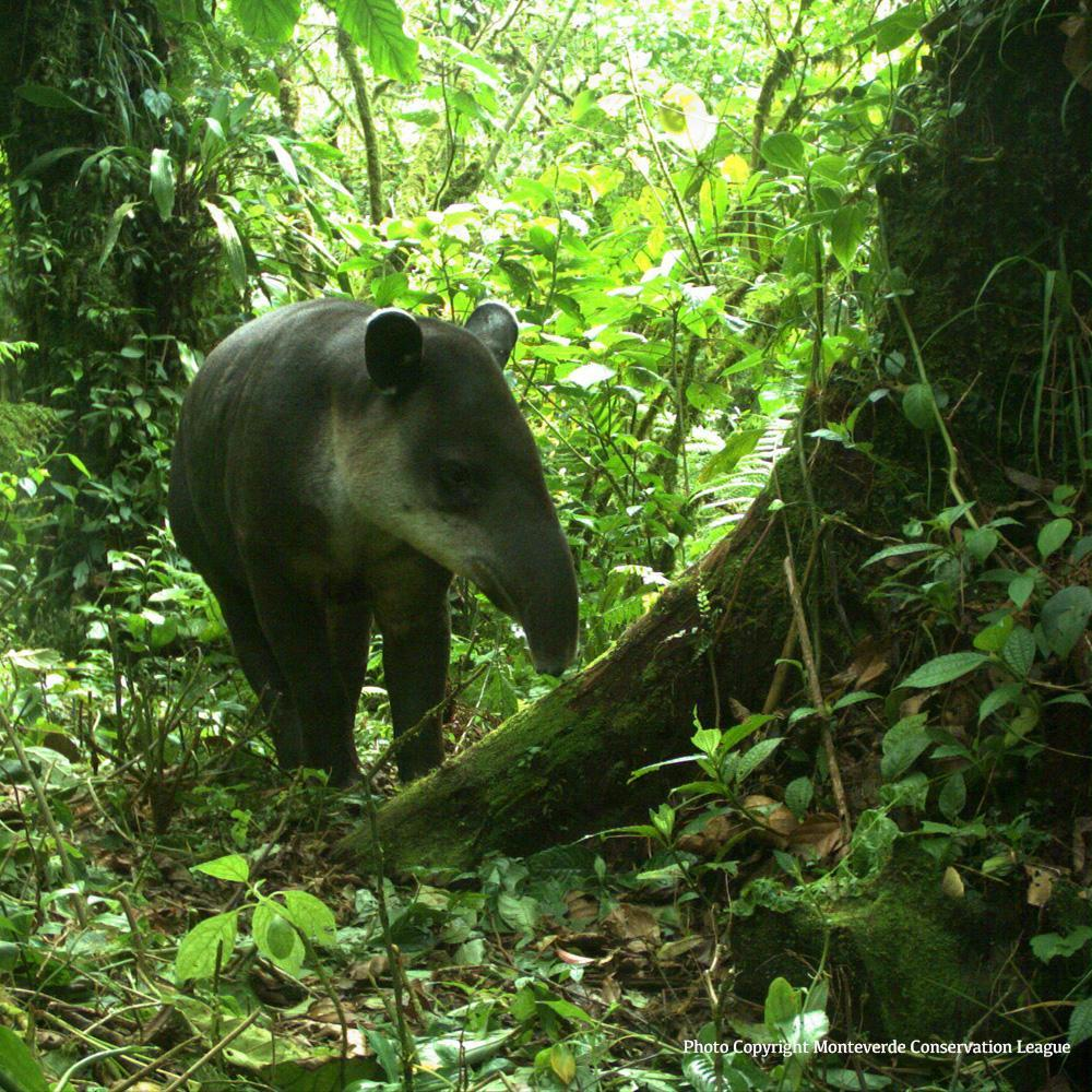 Donation - Protect Critical Costa Rican Rainforest