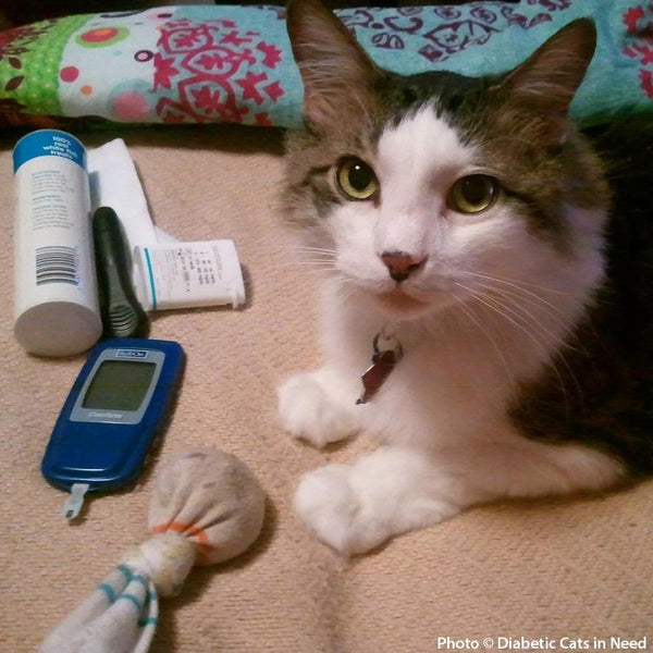 Donation - Provide Care And Treatment For Diabetic Cats