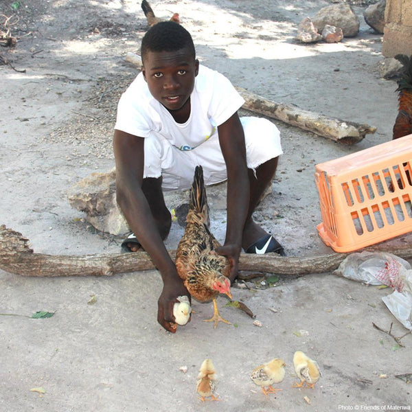 Donation - Provide Egg Laying Hens For Haitian Families