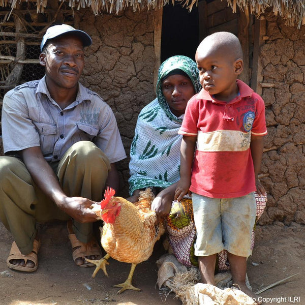 Donation - Provide Protein Rich Eggs For Malnourished Haitian Children