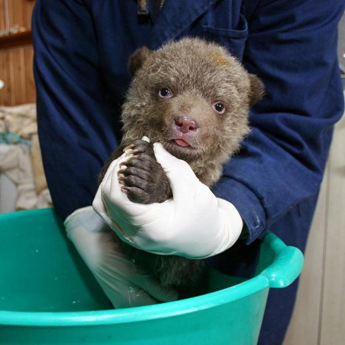 Donation - Rescue Orphaned Bear Cubs In Russia