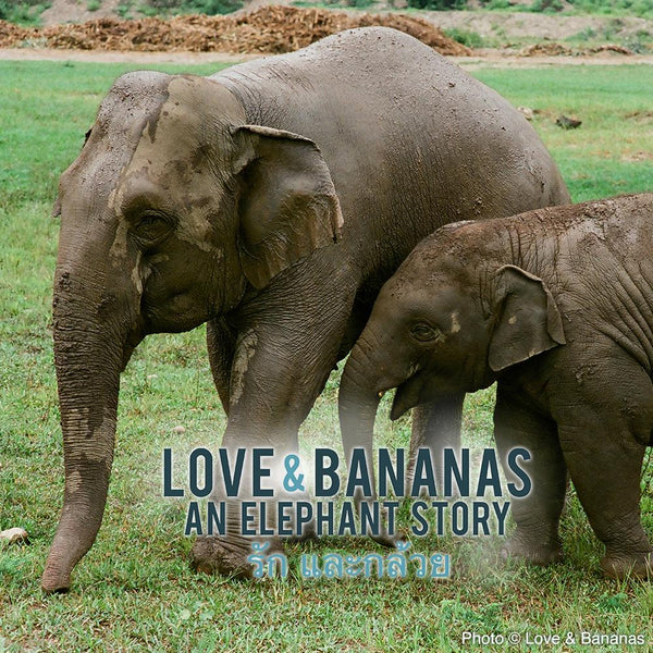 Donation - Rescue & Protect Asian Elephants