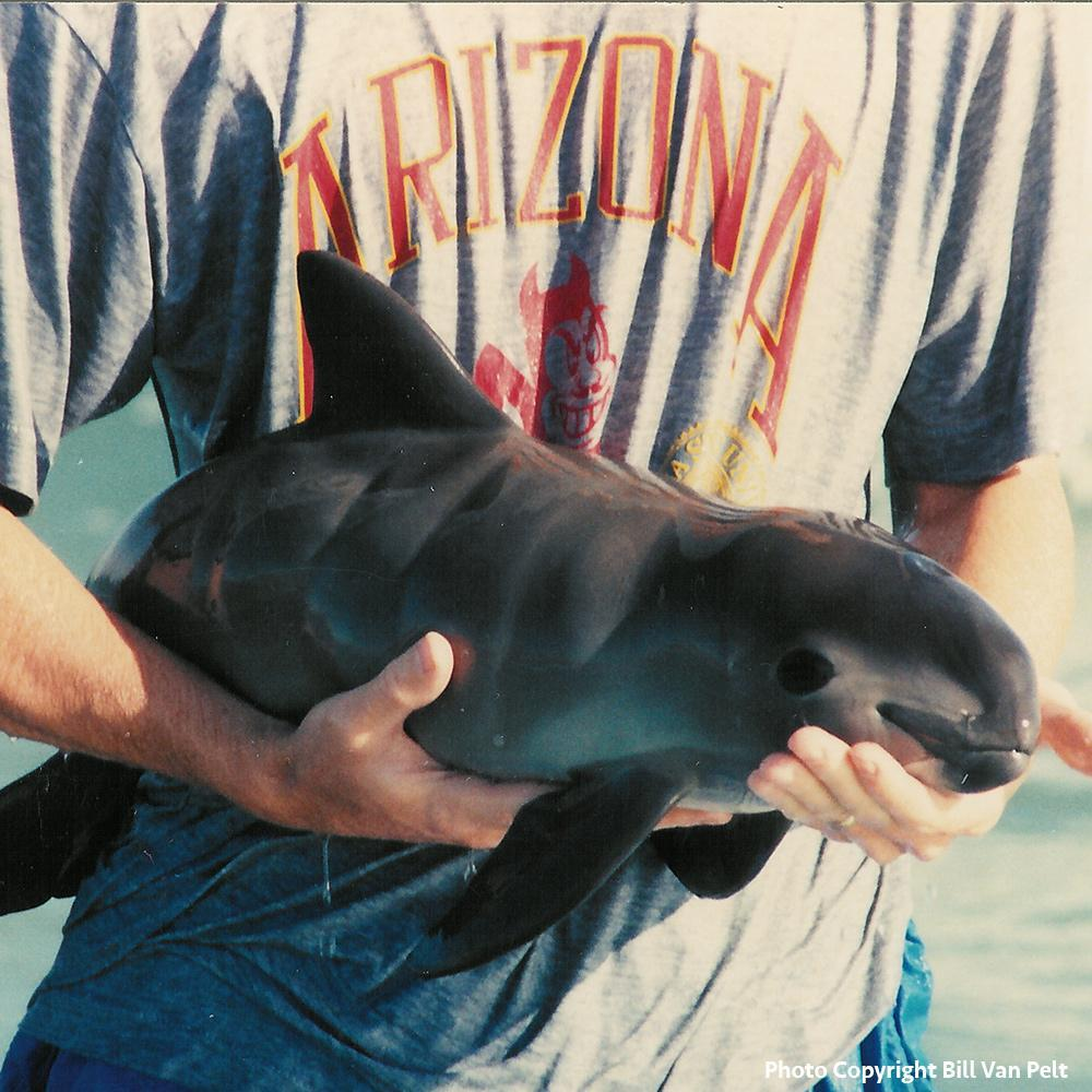 Donation - Save The Critically Endangered Vaquita