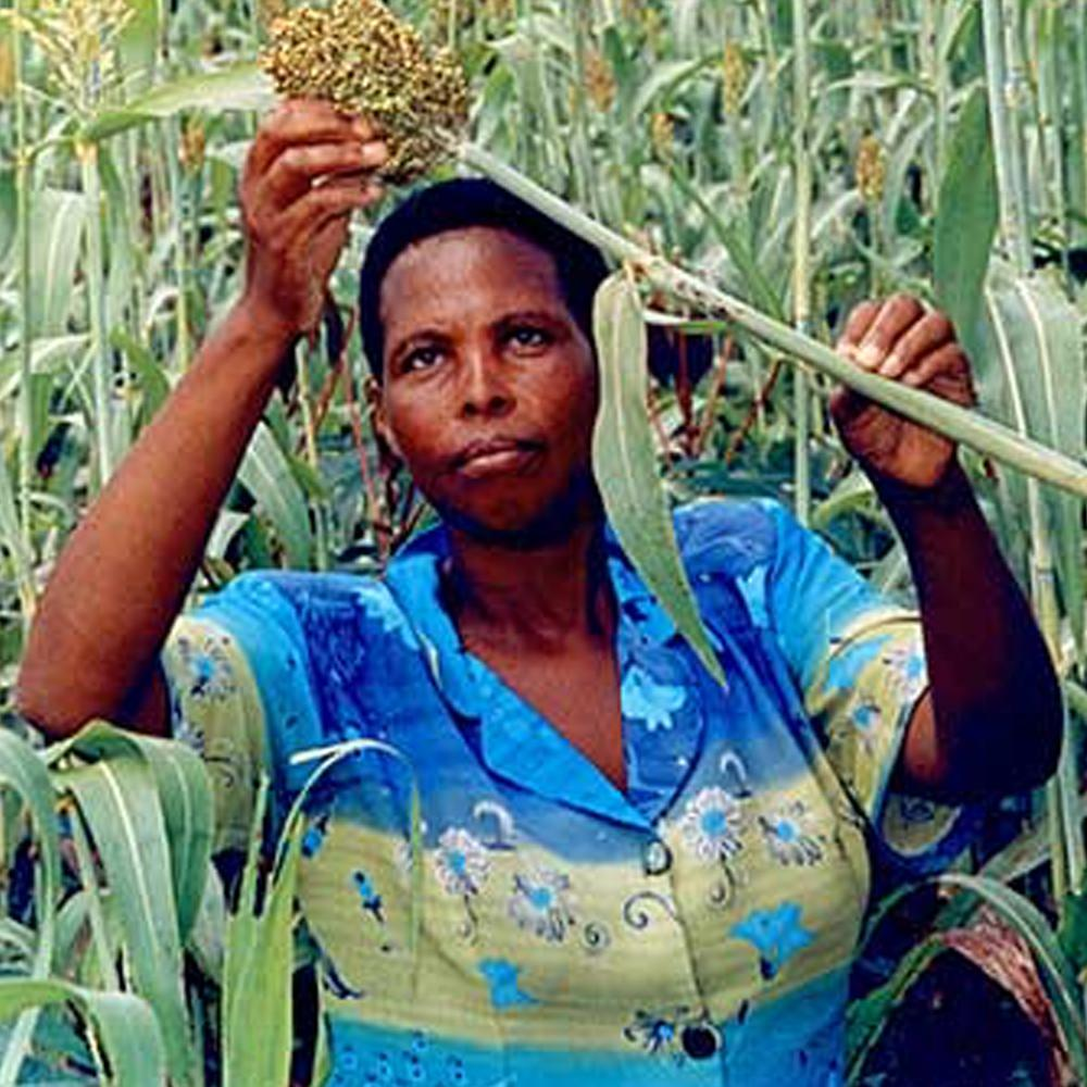 Donation - Seeds Of Hope For African Families