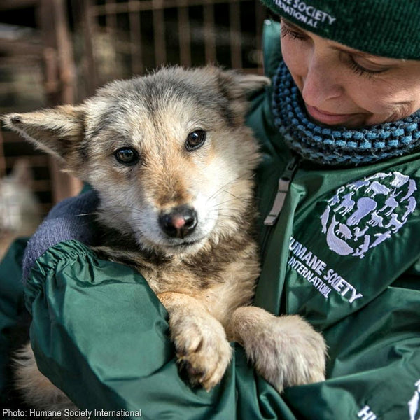 Donation - Stop Korean Dog Meat Farms