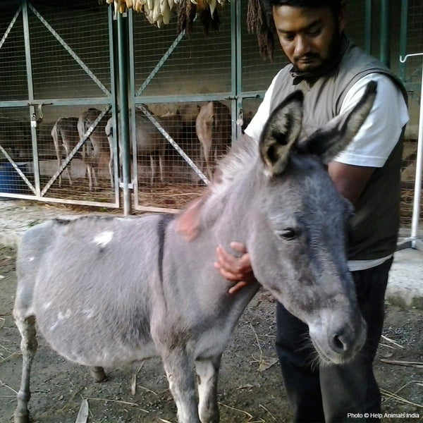 Donation - Support The Retired Donkey Sanctuary In Nepal