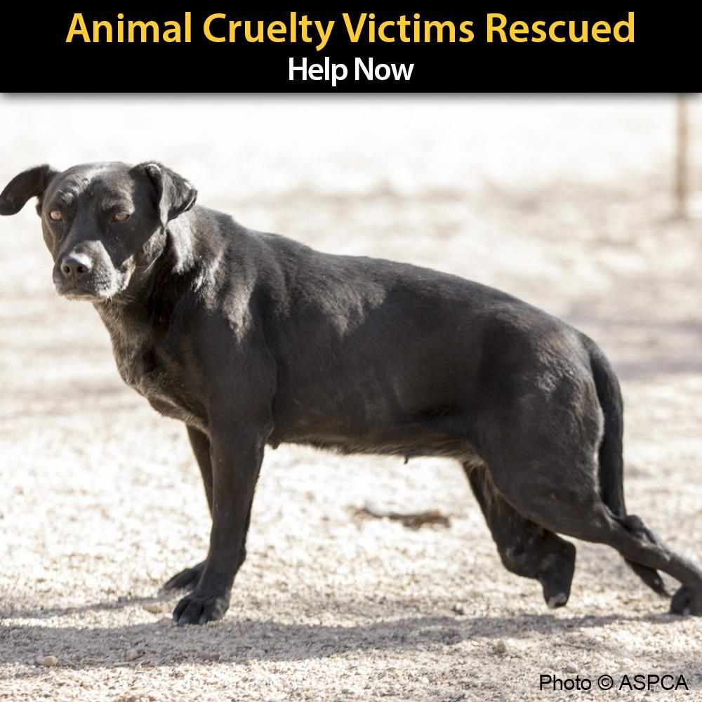 Donation - URGENT: Animal Cruelty Victims Need Your Help