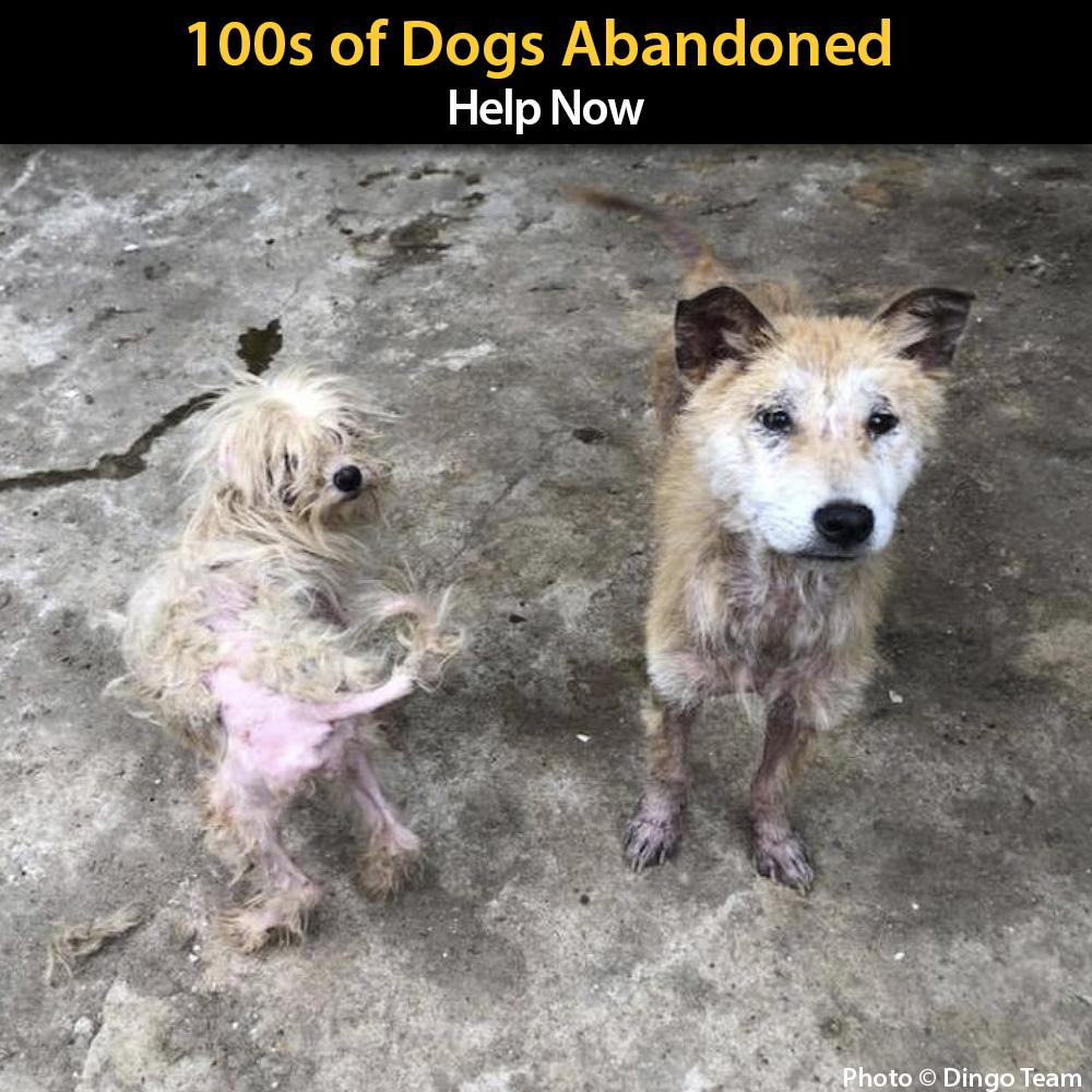 Donation - Urgent: Dogs Left To Starve - Help Now!