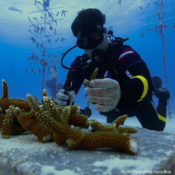 Donation - Veterans Respond: Coral Reef Restoration Hurricane Recovery