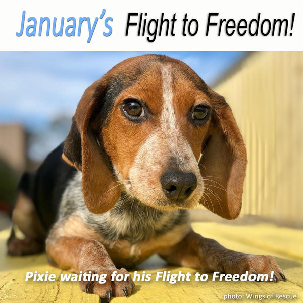Donation - Help Fly Pets To Freedom!