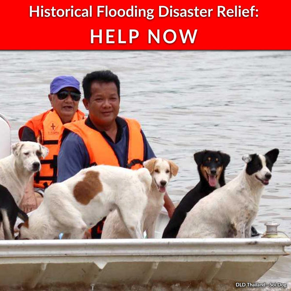 Donation - Record Flooding In Thailand: Help Rescue Pets Now