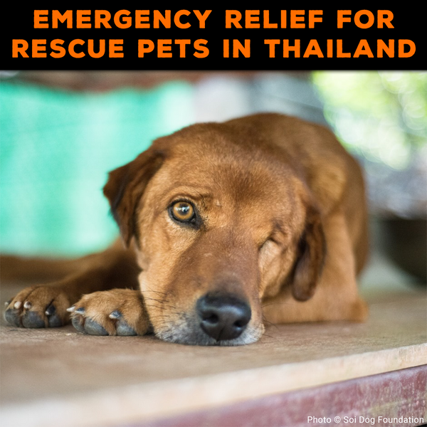 Emergency Relief for Overcrowded Dog Shelter in Thailand
