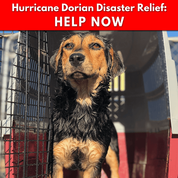 Donation - Hurricane Dorian: Help People And Pets Now