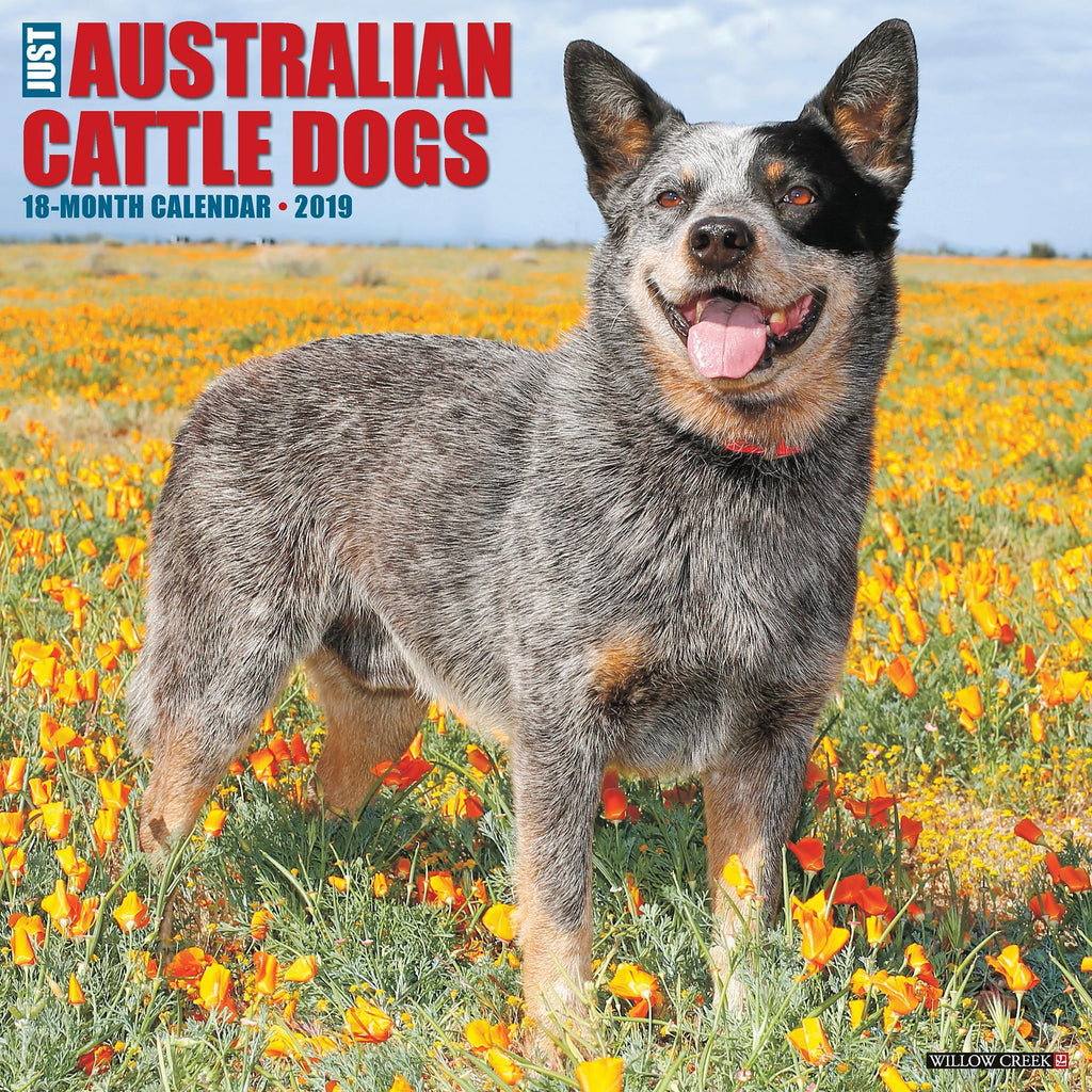 Just Australian Cattle Dogs 2019 Calendar