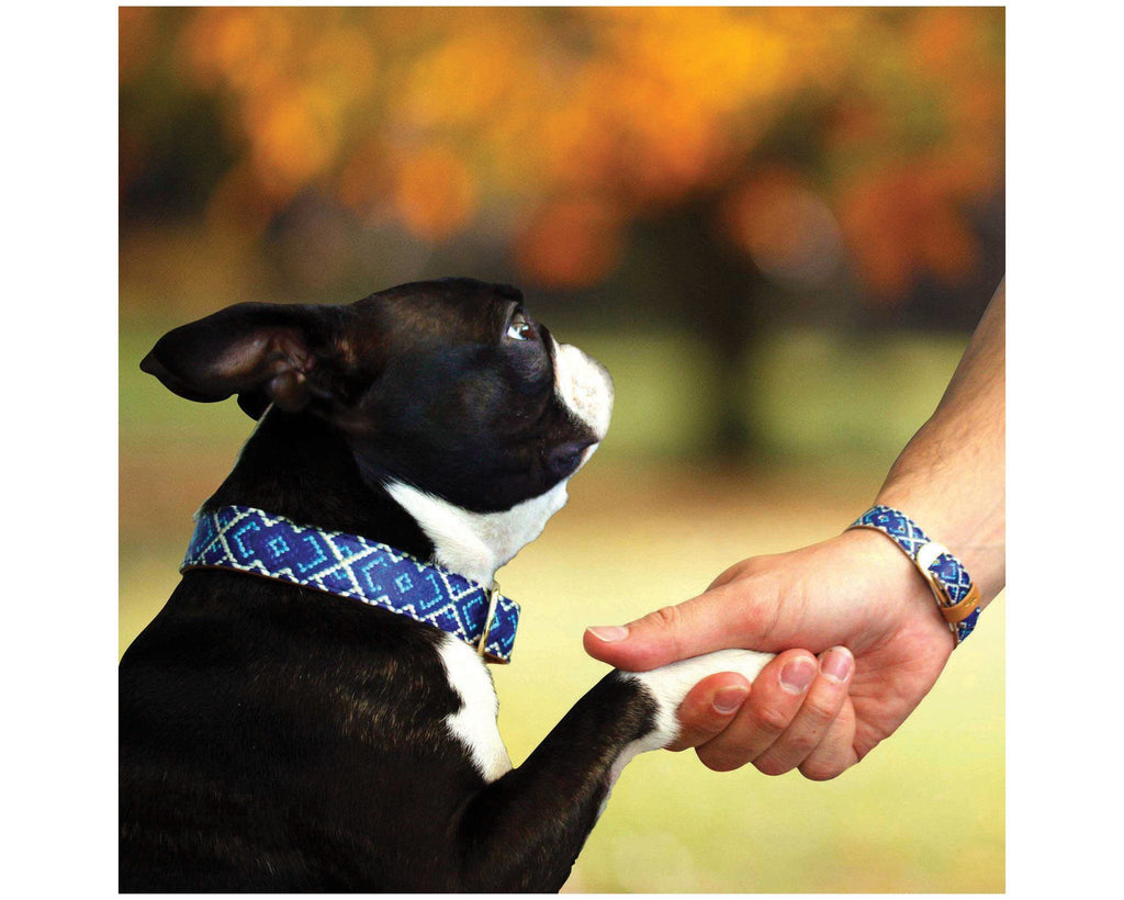 Mucky Pup Friendship Collar & Bracelet Set