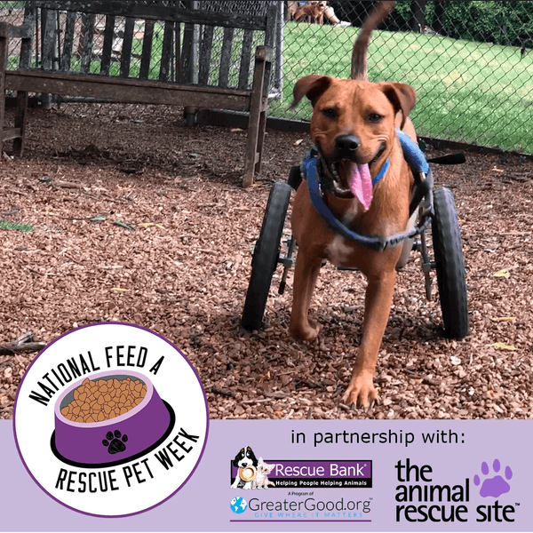 Donation - National Feed A Rescue Pet Week: Feed 4 Million Homeless Pets!