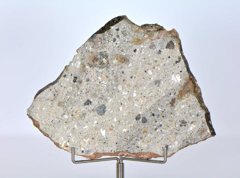 57.66g Howardite Meteorite Slice I NWA 11899 I Beautiful HED Slice