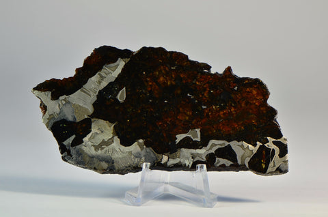 55.6 g SEYMCHAN Meteorite Full Slice I Spectacular Etch A+++ Collection Specimen
