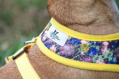 Eggplant Autumn Pet , Dog Harness - Hip Puppy logo - 5