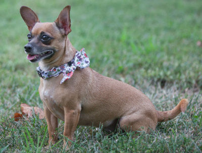 Wildflowers Removable Bow/Bowtie Collar - Hip Puppy