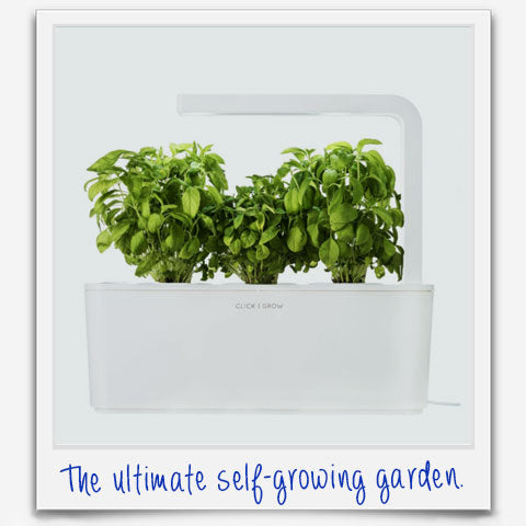 self-growing garden