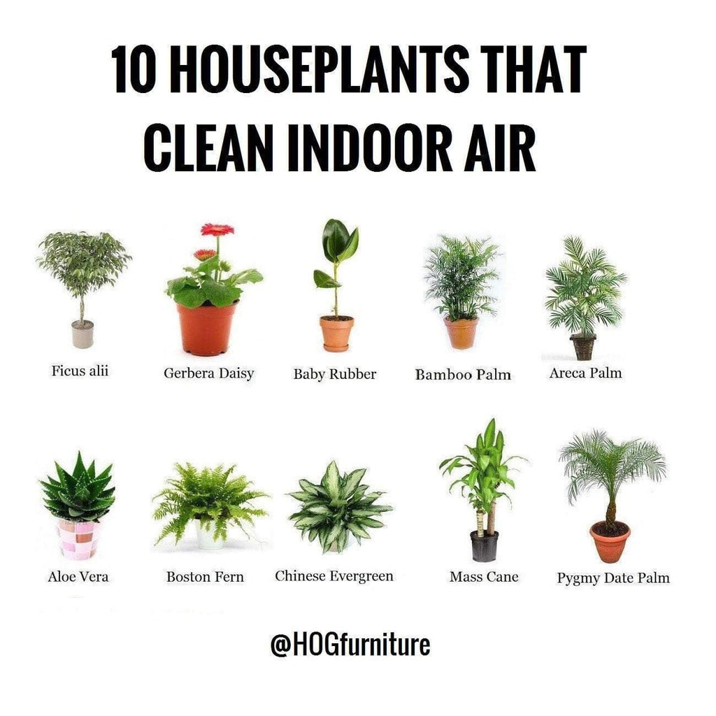 10 House plants that Clean indoor Air