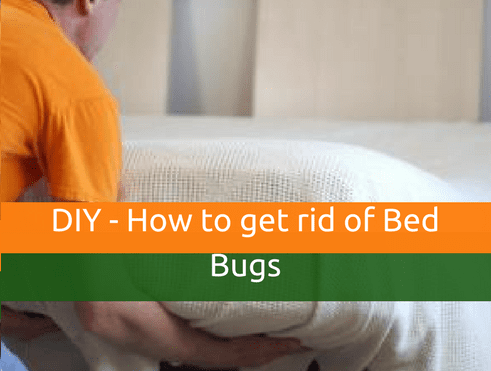 DIY - How to get rid of Bed Bugs