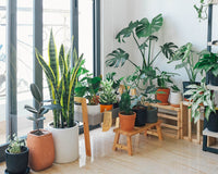 Why Do You Need House Plants in Your Home?