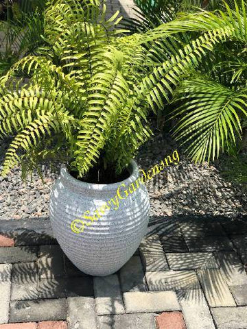 Gips ribbed plant pot