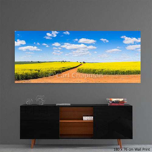 3679 Canola field and dirt track under blue sky cumulus clouds acrylic wall art photo print