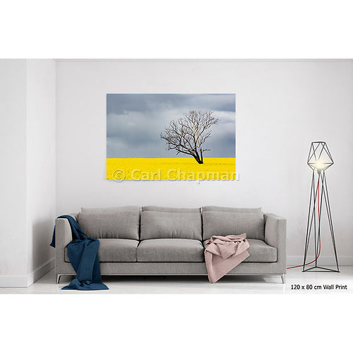 3742 Tree without leaves in canola crop during storm acrylic wall art photo print
