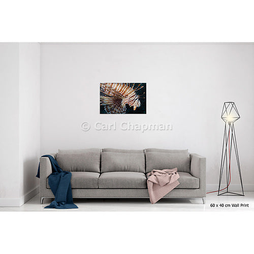 1090 Volitans lionfish or Red Firefish Pterois Volitans acrylic wall art photo print