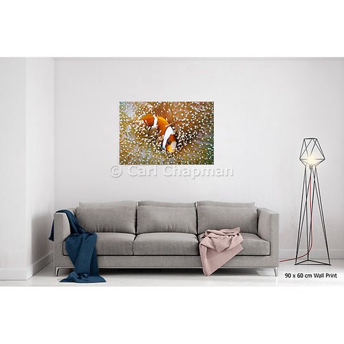 1150 Great Barrier Reef Anemonefish in Sea Anemone acrylic wall art photo print