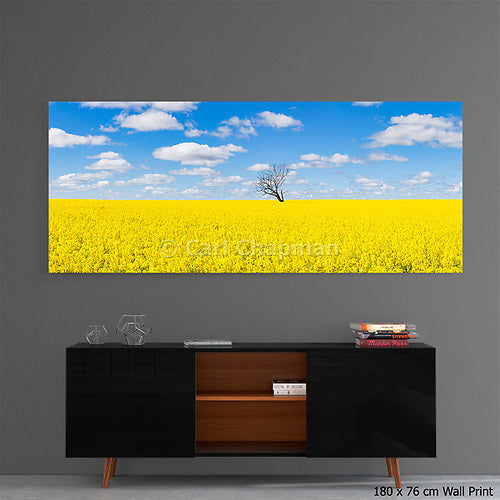 3773 Tree without leaves in field of canola acrylic wall art photo print