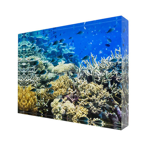 0911 Fish on tropical coral great barrier reef acrylic block photography print