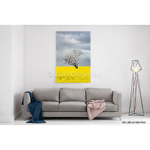 3741 Tree without leaves in canola crop during storm acrylic wall art photo print