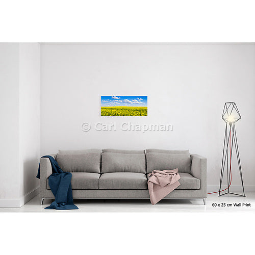 3642 Canola crop under blue sky and cloud acrylic wall art photo print