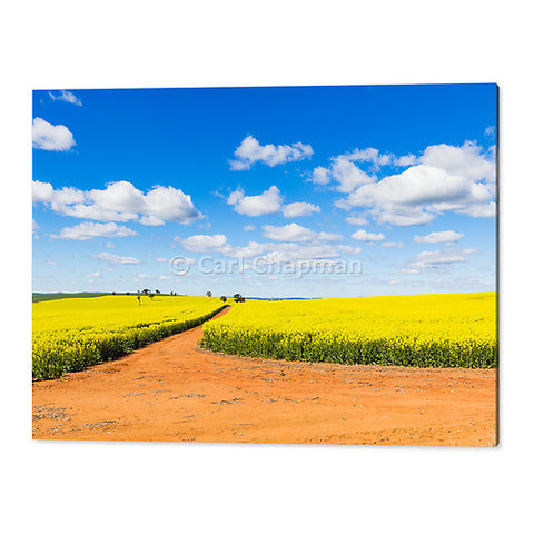 3682 Canola field and dirt track under blue sky cumulus clouds acrylic wall art photo print