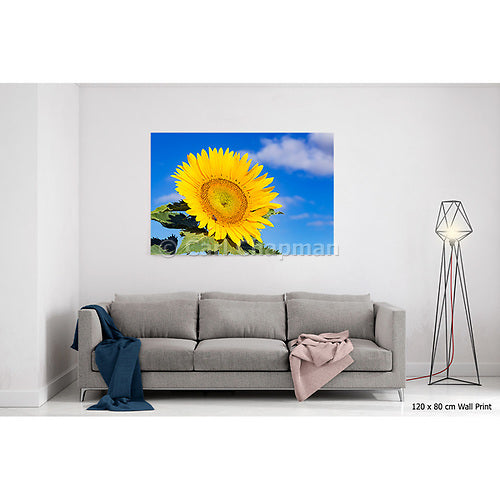 3436 Bee pollinating a flowering sunflower acrylic wall art photo print