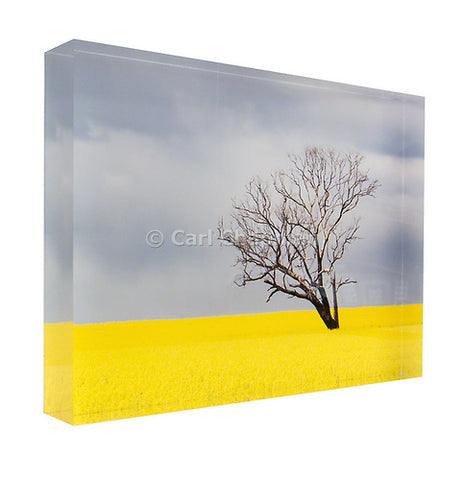 3742 Tree without leaves in canola crop during storm acrylic block photography print