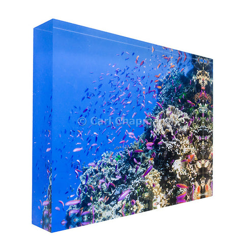 0983 Fish on tropical coral great barrier reef acrylic block photography print