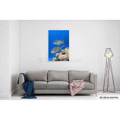 1183 Diagonal banded Sweetlips fish Plectorhinchus lineatus acrylic wall art photo print