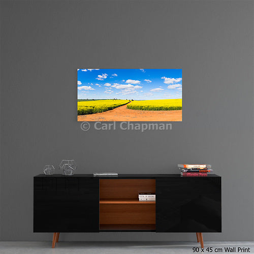3678 Canola field dirt track under blue sky cumulus clouds acrylic wall art photo print