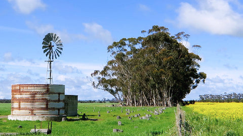 V0082 Windmill in paddock next to flowering canola crop