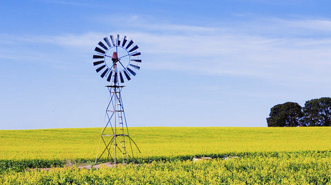 V0103 Windmill in a field of canola crop turning in the wind - Stock Video