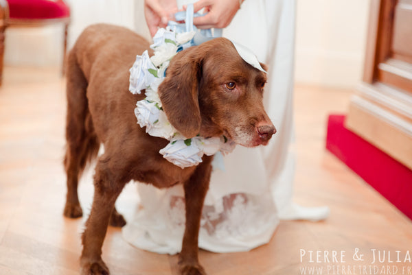 Dogs at Weddings - 12 Essential Do's and Don'ts