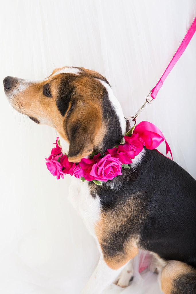 Cerise Pink Rose Collar