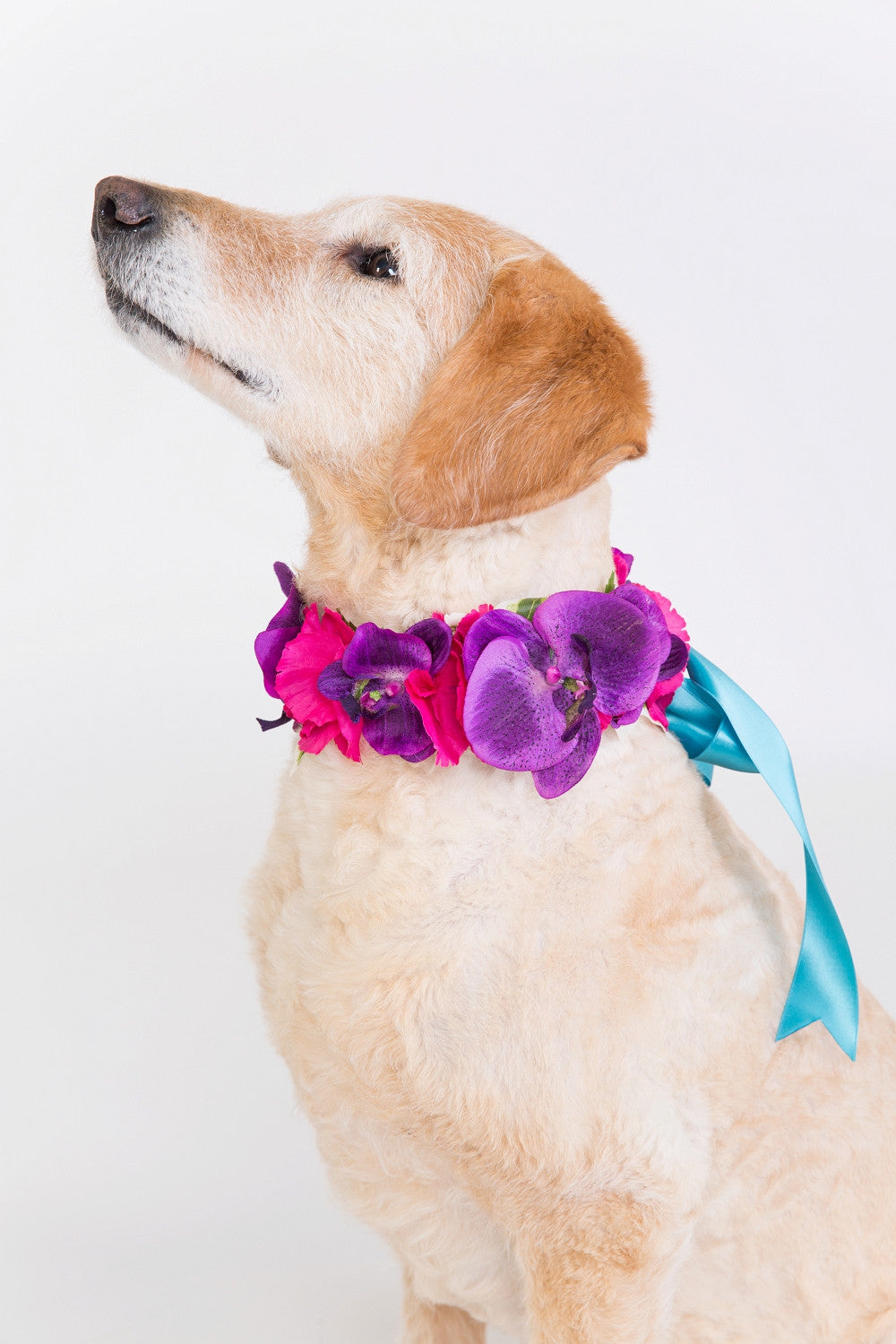 Cupid collars silk flower dog collars for pets at weddings aphrodite collar dhlflorist Choice Image