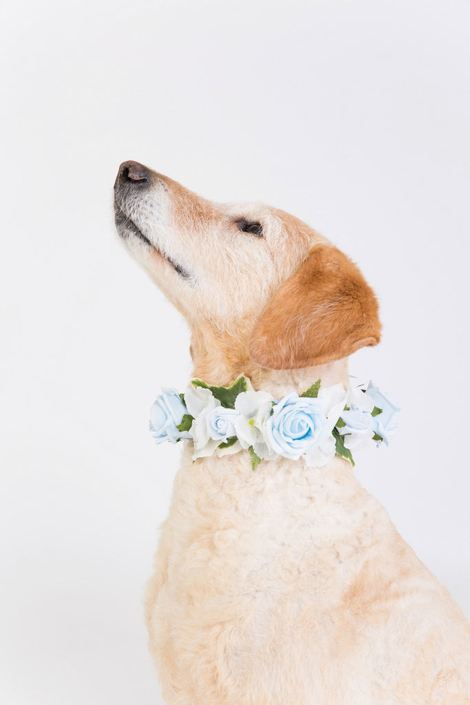 Blue Rose Collar
