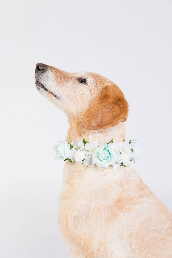 Peppermint Rose Collar